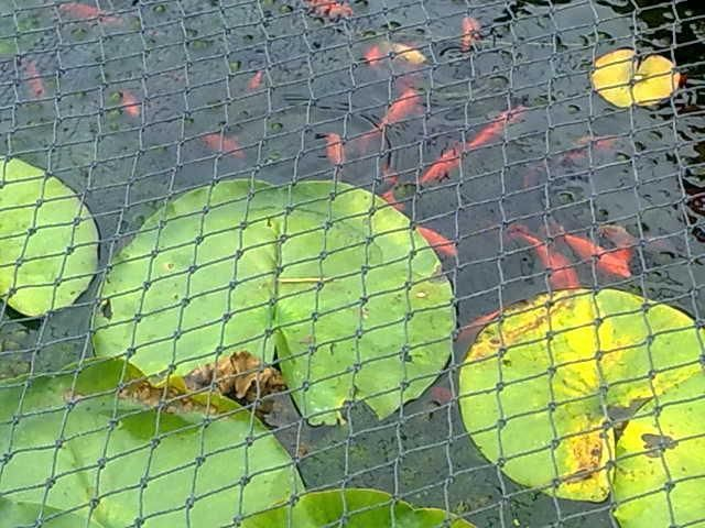 SMKN 2m × 2m CHILD SAFETY pond SUPER NET pool covers netting grids BLACK//BLUE