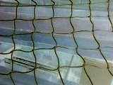 "DOVE HOMING  NET 10m x 10m   2"" MESH seagull pigeons"